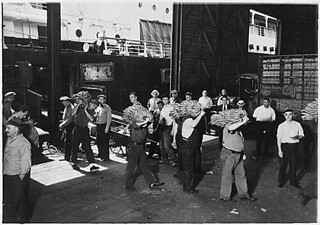 New York, New York - Longshoremen. This shows the prevailing method of transferring bananas from the end on the conveyor that carries them from the hold of the ship onto the dock. Then they are taken on the men's shoulders across...