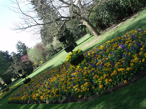 Cannon Hill Park - Spring flowers