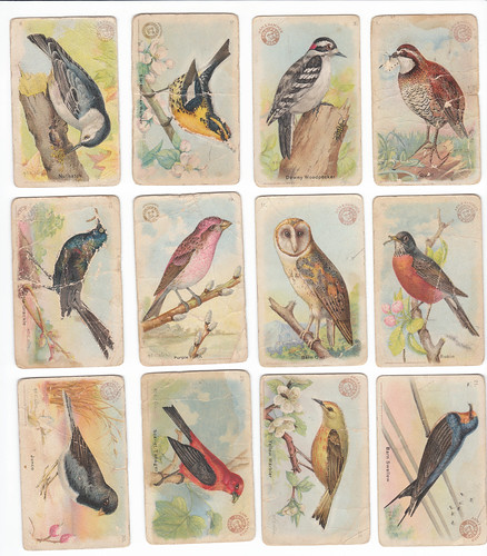 Arm and Hammer Bird Trading Cards: 1915-1918