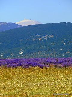 Mont Ventoux des de Ferrassières / Mont Ventoux desde Ferrassières / Mont Ventoux from Ferrassières