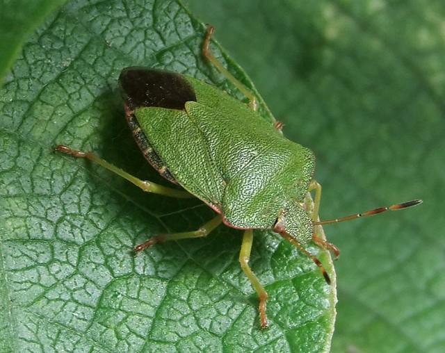 green garden bug flickr photo sharing