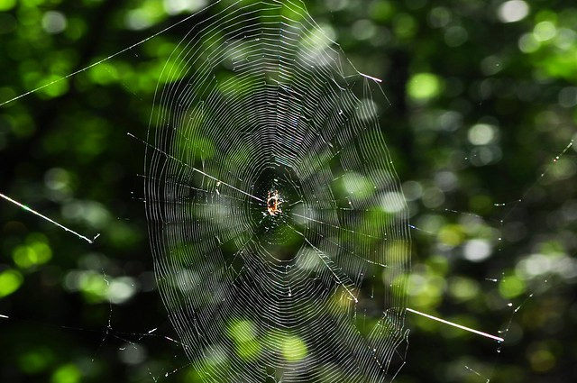 l araign 233 e sa toile et un bokeh flickr photo