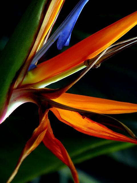 flores exoticas mexicanas