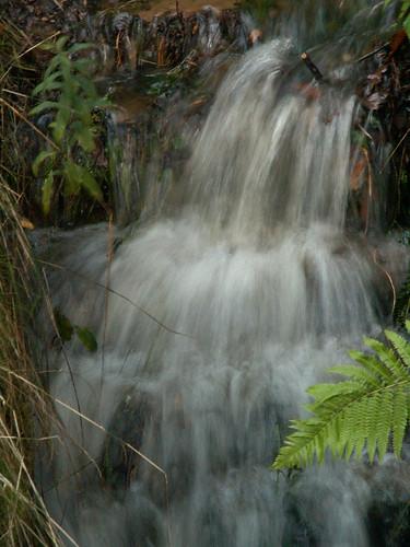 Quelle im Wald bei Dresden