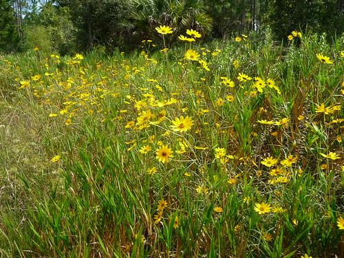 wild terrain forest natural florida wilderness ocalanationalforest northcentralflorida