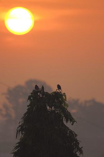morning shadow red orange sun india tree green nature sunshine birds sunrise dark lights maharashtra rise vikas pune viko kharadi koshti vikovikask