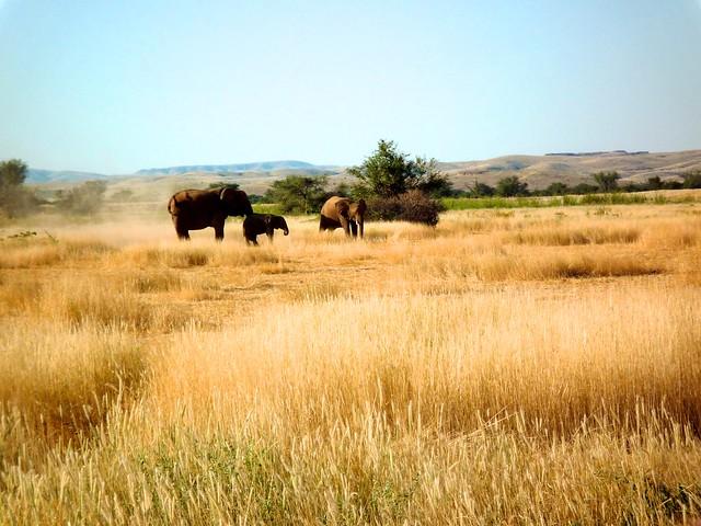 Elefanten in der Steppe