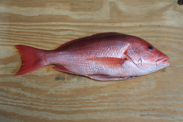 Le grand fromage project food blog 4 cedar plank red for Types of red fish
