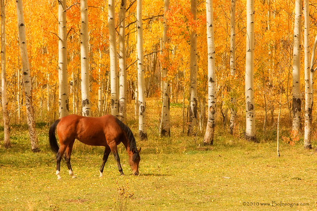 love horses pasture wallpaper - photo #18