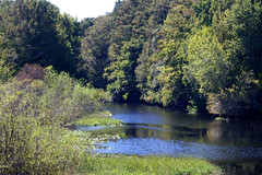 The Little Withlacoochie River IV