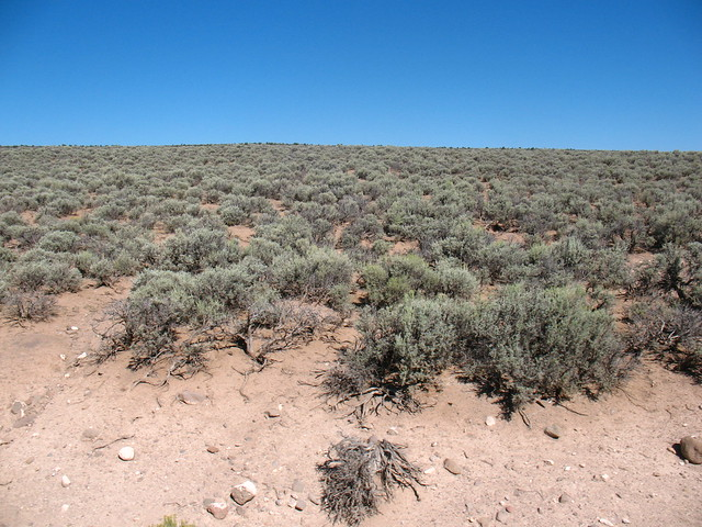 sage brush desert (Artemisia tridentata) | Cumbres and Tolte ...