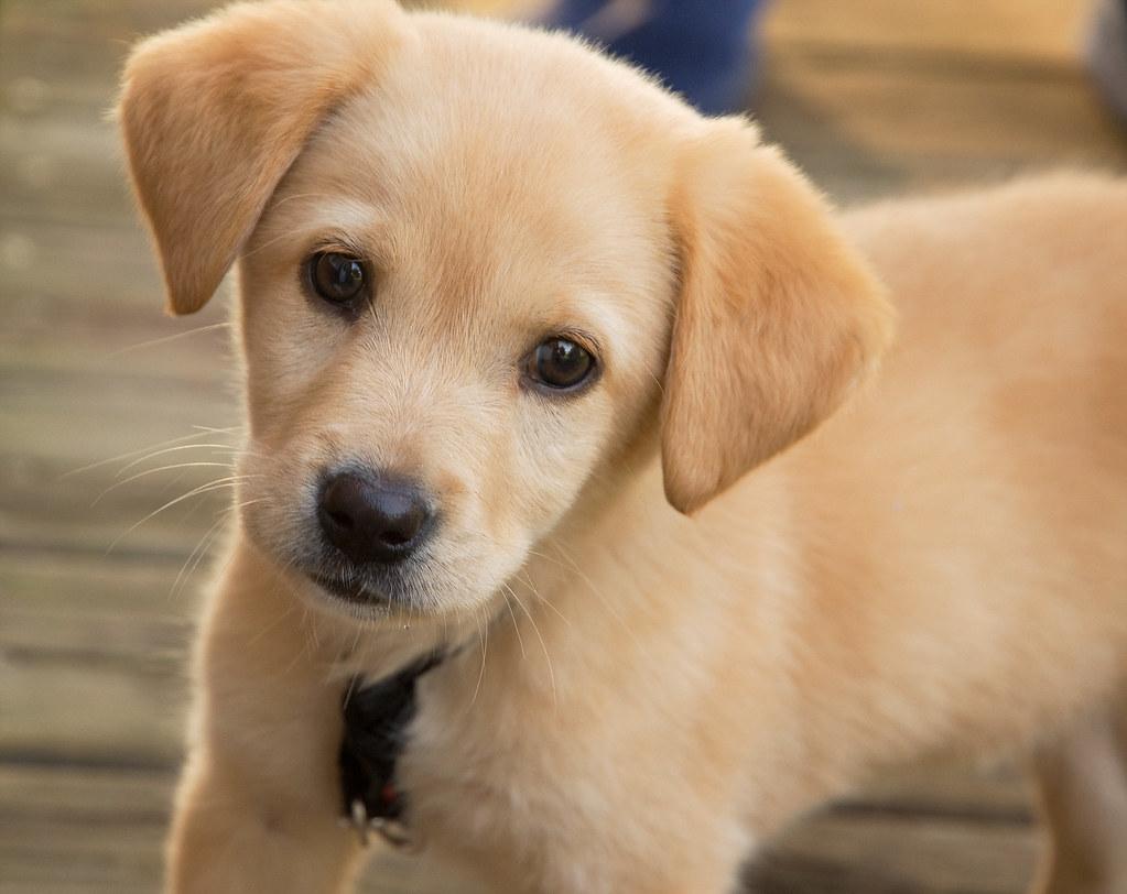 Puppy Jonathan Kriz Flickr