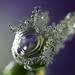 Frozen dewdrops #3 by Lord V