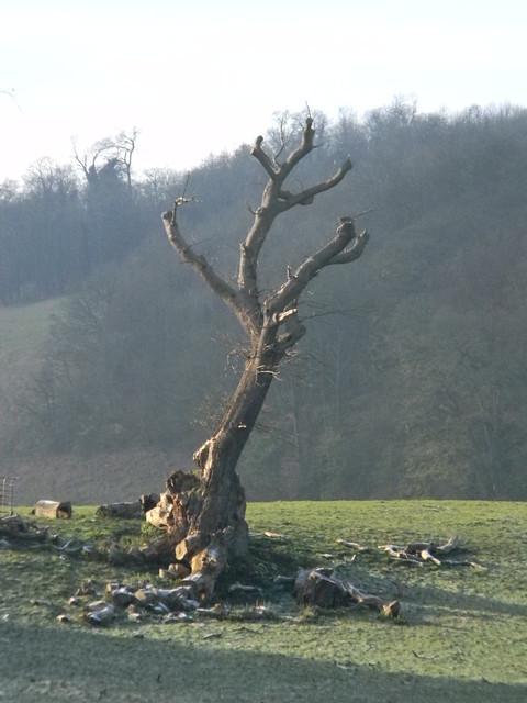 Distinctive stump