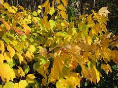 Autumn colors Walnut Creek Lake Raleigh NC 0510