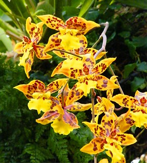 Orchids in Yellow