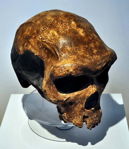 Early human, 300.000 yo, Broken Hill by Kabwe (South Africa)