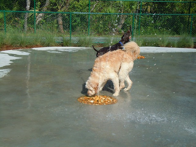 Backyard Water Features For Dogs : Outdoor dog park with water features  Flickr  Photo Sharing!