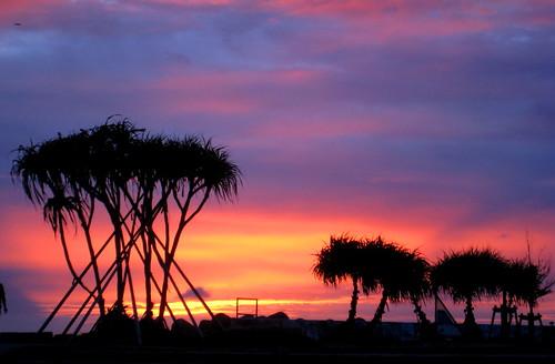 sunset sky cloud tree japan okinawa mygearandmepremium mygearandmebronze mygearandmegold mygearandmeplatinum tplringexcellence lpgoldenhour