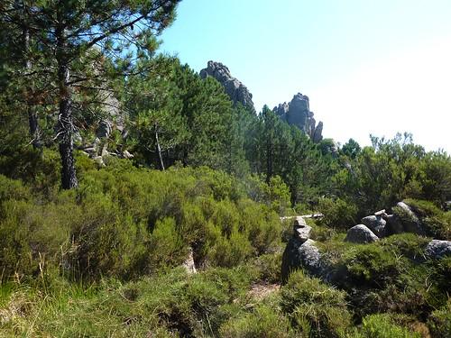 Trace cairnée en montant à Punta di Quercitella