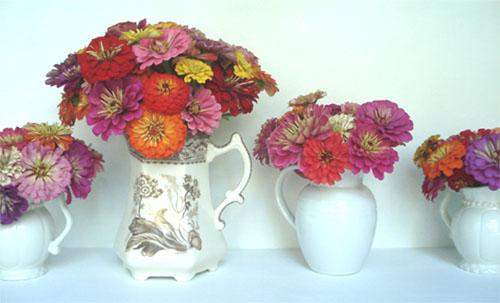 Zinnias in Vases