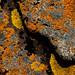 Small photo of Lichen, Brittany, France