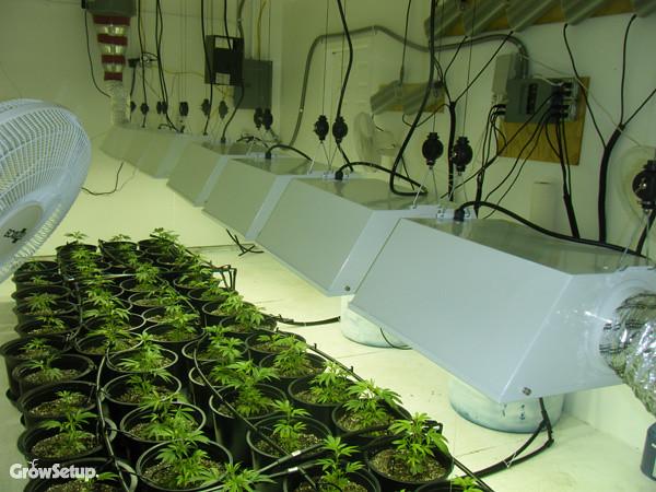 A Z Grow Room Experts Growsetup Com Flickr Photo