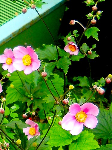 pretty pink flowers hide an air conditioner