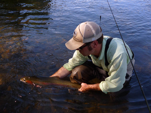 Local summer steelhead fishing report the caddis fly for Local fishing forecast