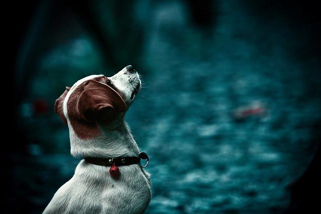 My wild Irish dog :)