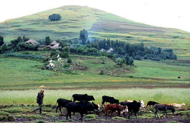 Ziema uprawna w Etiopii