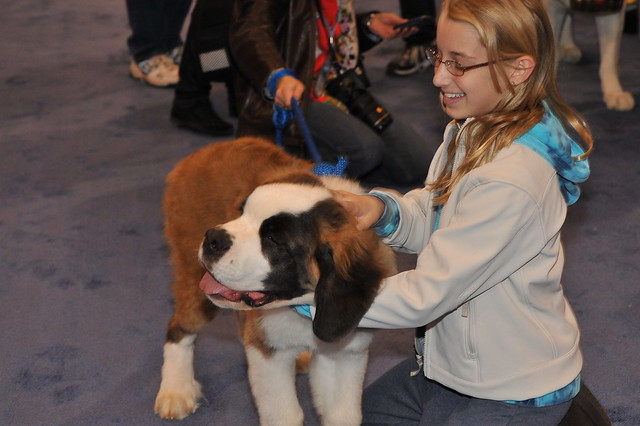 Dog And Cat Show Javits Center