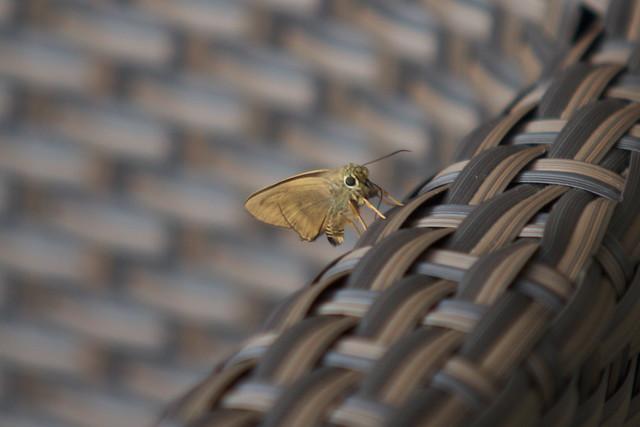 Header of Bugs