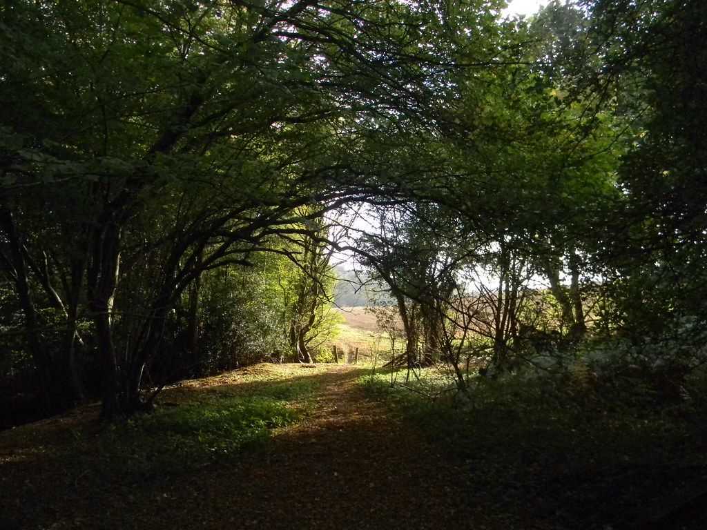 Path out of woods Buxted Circular