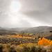 Weather Happening by Robert Otani
