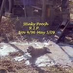 Stinky Pooch