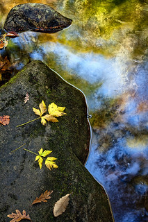 Leaf...Rock...Water