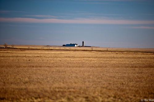 usa barn pheasant farm farming hunting silo western kansas irrigation sublett