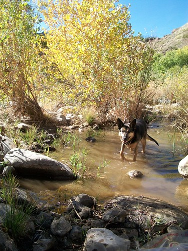 Oak Flat Wading