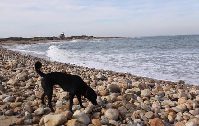 Block Island Dog Park
