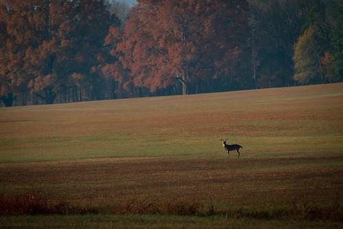 park autumn fall deer battlefield buck chickamauga