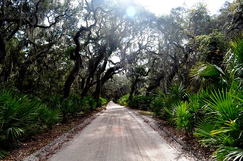 Cumberland Island National Seashore Main Road, Nov. 2010