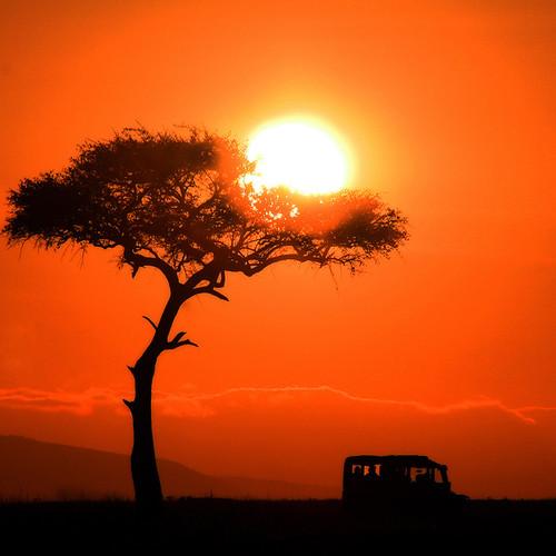 tree nature sunrise kenya safari soe masaimara kartpostal flickraward roseawards saariysqualitypictures magicunicornverybest sailsevenseas flickraward5 mygearandme flickrawardgallery artistoftheyearlevel4 flickrstruereflection1 artistoftheyearlevel5