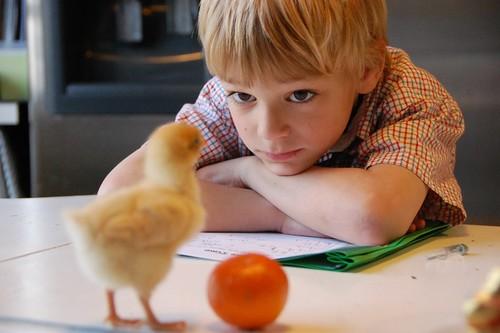 homework with a chicken