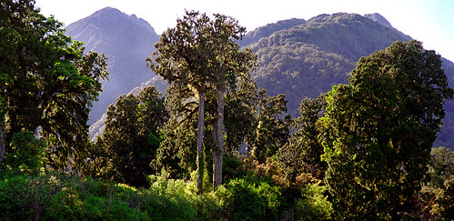 New Zealand Rainforest.