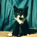 Kitten 0012pr