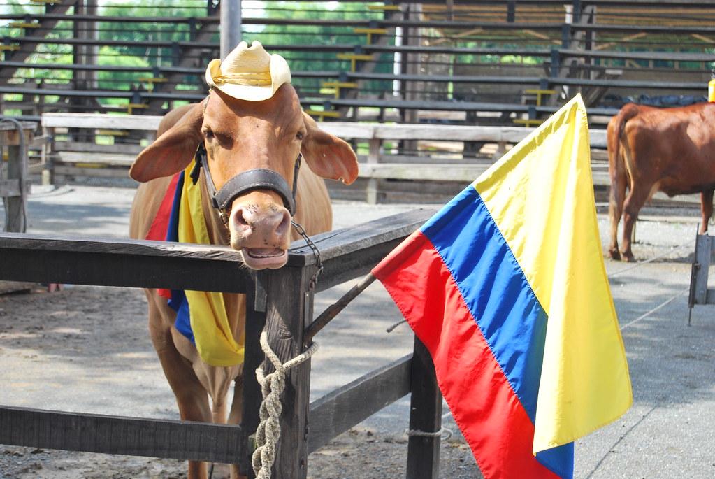 Imagen de una vaca ultra-patriótica colombiana en PANACA, Quindio