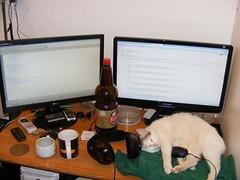 Funny-Cat_A-cat-at-work_63172-480x360