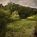 Lily pond, Don Valley Brickworks
