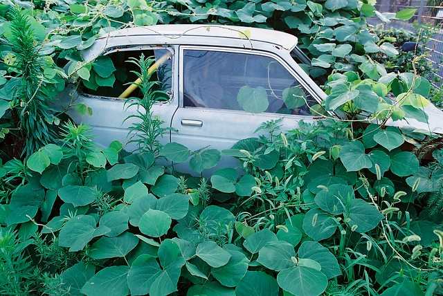 Abandoned Car in Green